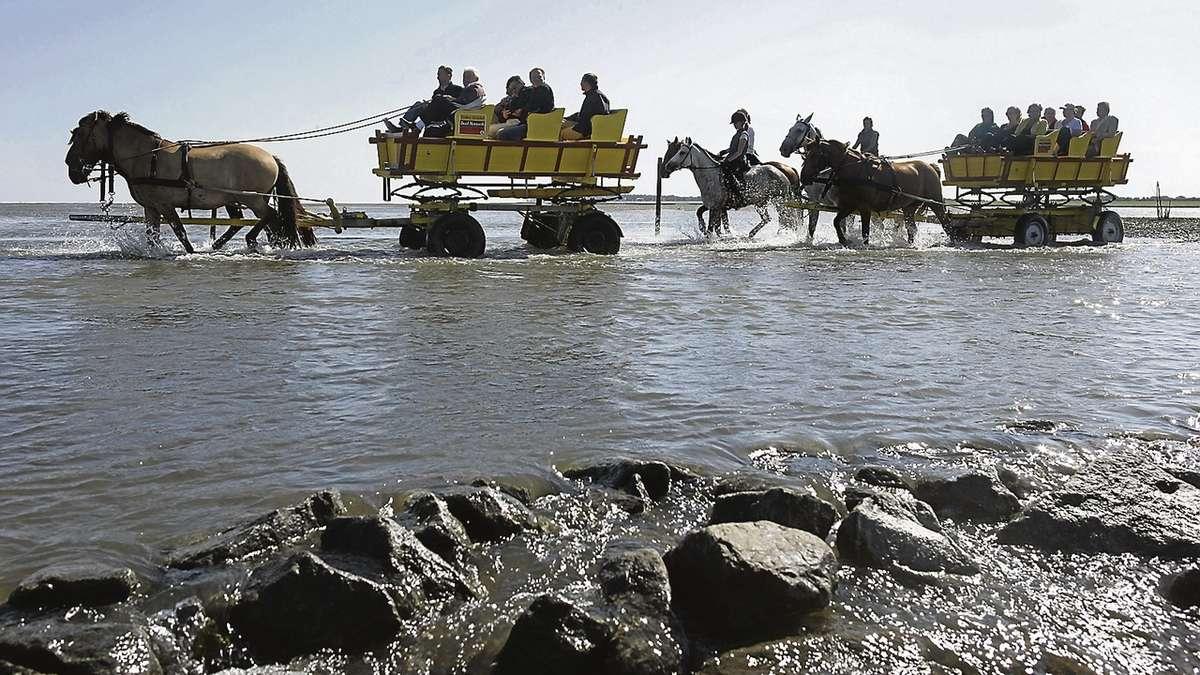 Der Nationalpark Schleswig-Holsteinisches Wattenmeer feiert in diesem Jahr sein 30-j�hriges Bestehen.