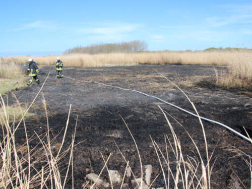Reetfläche in Brand geraten