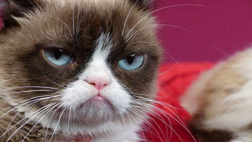 "Über 1,5 Millionen Follower: Internetberühmtheit ""Grumpy Cat"" ist tot"
